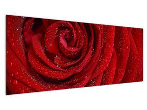 Obraz - detail růže (V020684V14558)
