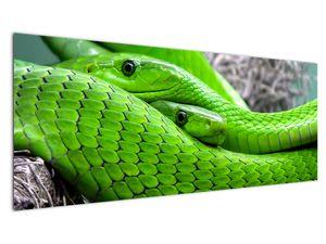Obraz zelených hadů (V020689V14558)