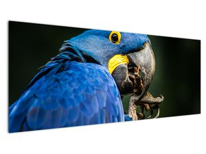 Obraz papouška (V020714V14558)