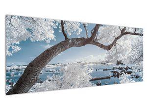 Obraz zasněženého stromu u vody (V020718V14558)
