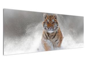 Obraz bežiaceho tigra v snehu (V020719V14558)