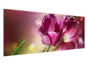 Obraz růžových tulipánů (V020887V14558)