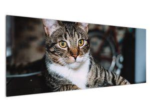 Obraz kočky (V020889V14558)