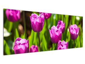 Obraz tulipánov na lúke (V020893V14558)