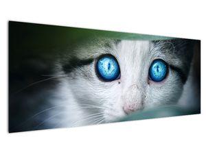 Obraz kočky (V020944V14558)