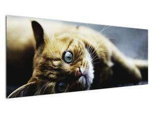 Obraz kočky (V020963V14558)