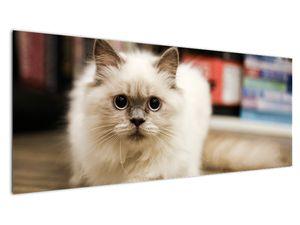 Obraz bílé kočky (V021124V14558)