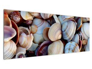 Kagyló képe (V021131V14558)