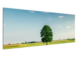 Obraz stromu na louce (V021171V14558)