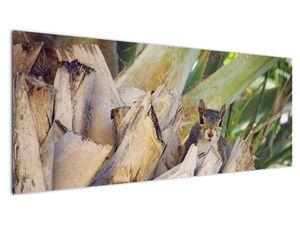 Obraz veverky na stromu (V021177V14558)