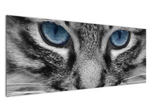 Obraz kočky (V021221V14558)