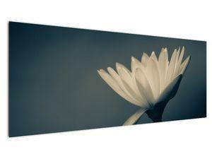 Obraz květiny (V021223V14558)