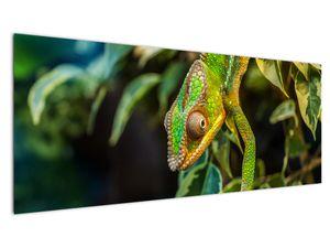 Obraz chameleona (V021236V14558)