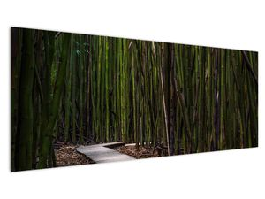 Obraz - Medzi bambusy (V021324V14558)