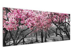 Obraz stromů Magnolíie (V021344V14558)
