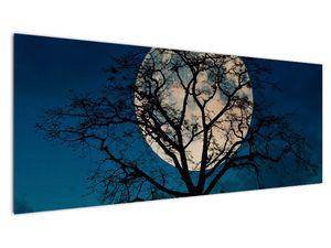 Obaz stromu s úplňkem (V021355V14558)