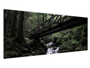 Obraz z černého lesa (V021686V14558)