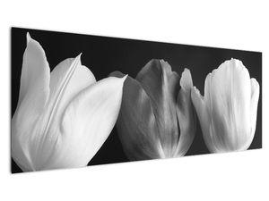 Kép - fekete-fehér tulipán virág (V021916V14558)