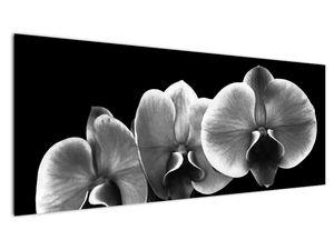 Obraz květu orchideje (V022015V14558)