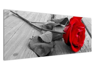 Slika rdeče vrtnice (V022288V14558)