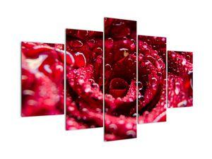 Obraz květu červené růže (V020009V150105)