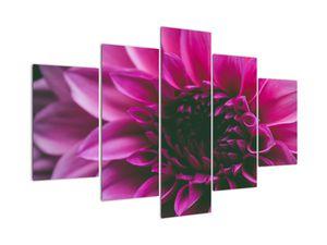 Obraz růžového květu (V020010V150105)