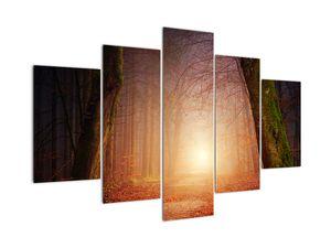 Slika jesenskega gozda v megli (V020013V150105)