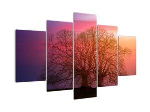 Obraz stromů v mlze (V020088V150105)
