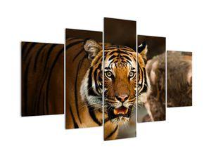 Obraz tygra (V020183V150105)