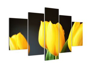 Obraz tulipánů (V020187V150105)