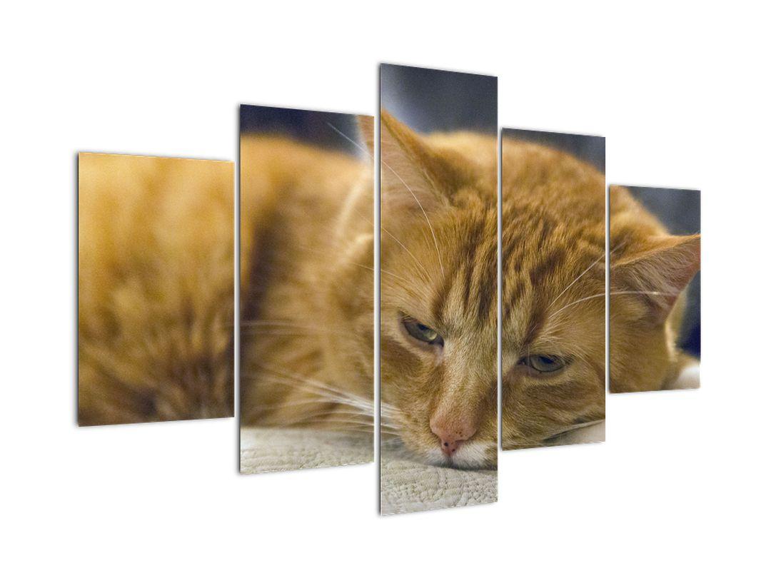 Obraz mačky (V020192V150105)