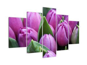 Obraz - květy tulipánů (V020194V150105)