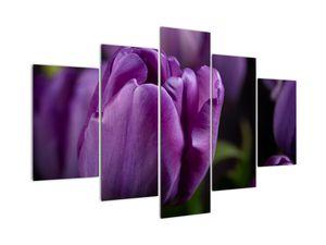 Obraz květů tulipánů (V020215V150105)