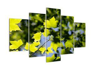 Tablou - frunze de arțar (V020233V150105)
