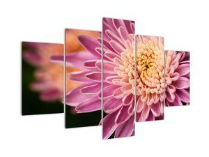Detailní obraz květu (V020238V150105)