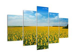 Obraz - lán slunečnic (V020250V150105)