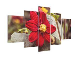 Obraz květiny (V020279V150105)
