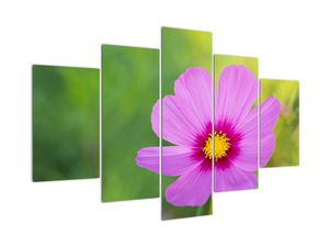 Obraz - luční květina (V020285V150105)
