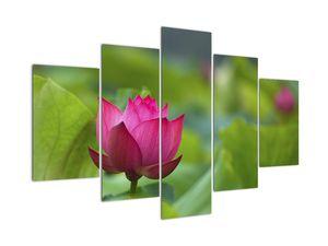 Obraz - vodní rostlina (V020286V150105)