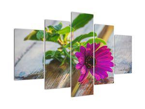 Obraz řezané květiny (V020291V150105)