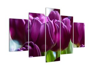 Obraz tulipánů (V020308V150105)