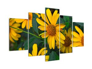 Obraz žlutých květin (V020309V150105)
