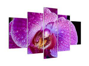 Detailní obraz květu orchideje (V020314V150105)