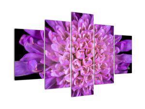 Detailní obraz květu (V020318V150105)