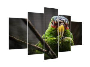 Tablou cu papagal (V020325V150105)