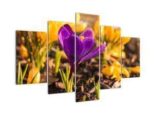 Obraz fialové květiny (V020341V150105)