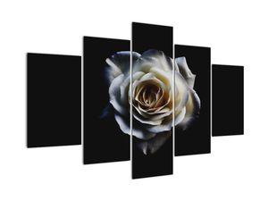 Obraz bílé růže (V020370V150105)