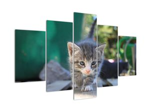 Tablou cu pisicuțe (V020380V150105)