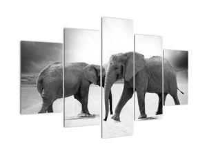 Obraz - čiernobiele slony (V020398V150105)