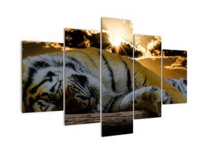 Tablou tigrul dormind (V020408V150105)